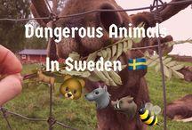 Animals in Sweden