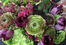 Freshly Cut Arrangements / Everyday at the flower shop. / by Freshly Cut