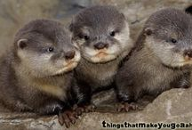 Otters / by Denise Stahl