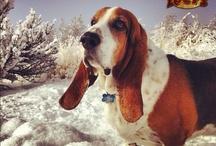 My dog, my basset....... / by Betty Fraga