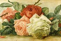 paul de longpre flowers watercolor, цветы акварель