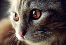 Beaux yeux de chats
