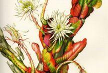 Art A Flor da Lua, Margaret Mee