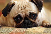 pug love / by Holly Scheer
