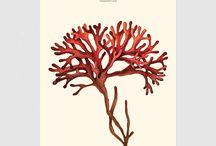 Ocean Life, Coral, Reef Design / handmade, digitalized prints of algae, corals and underwater sea life, by Dorota Wątkowska