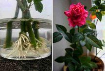 Цветоводство и растениеводство