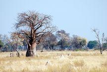 Africa travel / Viaggi in Africa: consigli utili su dove andare e come affrontare i tuoi viaggi i Africa