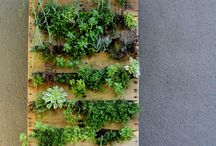 Garden / aspirational growing of green things / by Lauren O'Connell