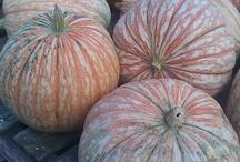 •(★)• Pumpkins Farm •(★)• / by Heike Gaidischki