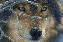 Amazing Animals / Buitengewoon mooie dieren