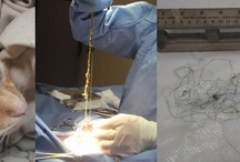 Pet Surgery / Images related to pets having surgery help educate owners about pet surgery.