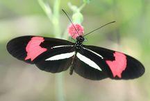 Butterfly's / by Jeanie Kay West