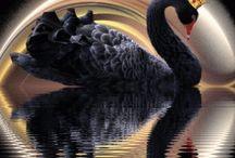 nejkrasnejsi ptaci