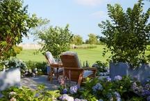 Gorgeous Gardens / by Brandi Newell