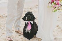 Weddings / by Lisa Brett