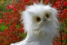 Wise and Wonderful / I used to collect owls. Now I collect pictures of owls. They take up less space.