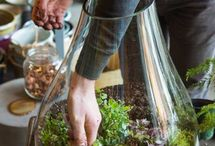 compo plante et jardin