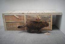 maison du chat