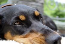 Dog of my dreams