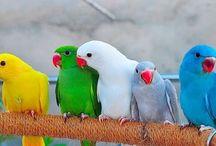 Kuşlarr
