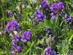 Herbář / rostliny