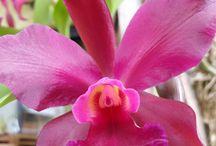 o mundo encantador das orquidead