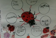 Bugs! / by Lora Crowley