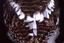 uil+owl