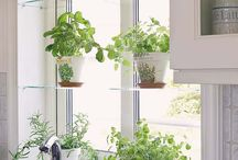 Herbs in the kitchen pots
