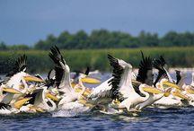 Delta Dunării / Cel mai nou pământ din Europa (creşte cu 40 m de pământ în fiecare an), a treia ca importanţă ecologică din cele 300 de rezervaţii naturale din lume şi locul cu cea mai bogată fauna ornitologică din lume (peste 250 specii)