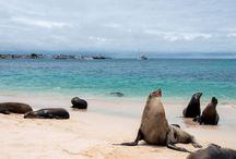 South America Travel Deals & Savings