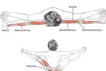 해부학적 근육공부