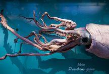 Nueva Museografía / La propuesta plantea un viaje a través de los distintos ecosistemas de la región, que comienza por el mar profundo y recorre distintas zonas de Chile central: la costa, las islas oceánicas, el río Aconcagua, el Parque Nacional La Campana y el valle central.