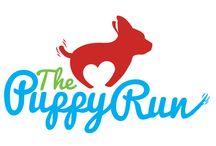The Puppy Run 2015