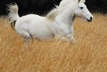 caballos / by Libertad Alomia
