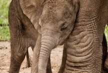 Elephants. / by Wanda Little