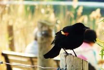 Birds / by Kelly-Sue O'Connor Gatti