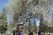 PICNIC PRIMAVERAL / picnic primaveral en medio de la naturaleza y disfrutando del sol.