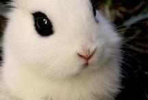 Artspiration: Bunnies