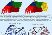 Anatomia/ Passarinho