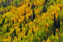 Autumn in Vail / Vail is an absolutely amazing destination any time of year, but it's truly magical in the Fall. The mountainsides are transformed from a lush green to a vibrant combination of yellow, orange, and red. There's no better time to book a vacation rental in Vail!