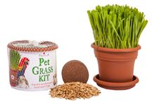 Cats / the benefits and uses of Priscilla's Pet Grass