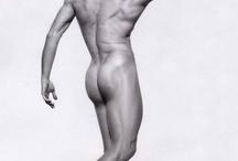 Muscles du torse