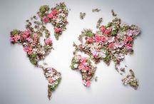 creazioni  particolari di fiori