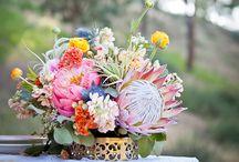 Protea blomme