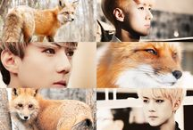 Exo Animal Edits