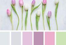 colors pallet