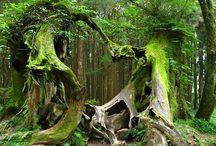 Trees & Tree Houses