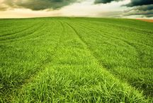 Farming / Farming tips, Pictures, seeds, fertilizer, herbicides. Just all about Agricultural Intelligence.
