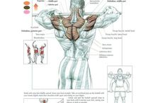 anatomic trainings